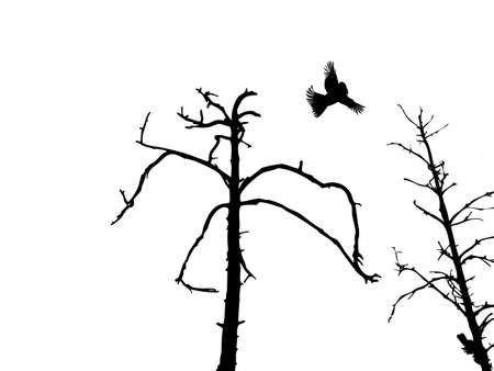 deserted: silhouette dry tree and birds isolated on white background