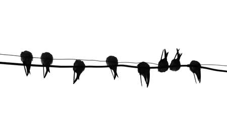 silhouette migrating swallow reposing on electric wire Vector