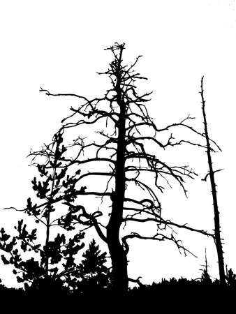 perish: silhouette dry tree isolated on white background       Illustration