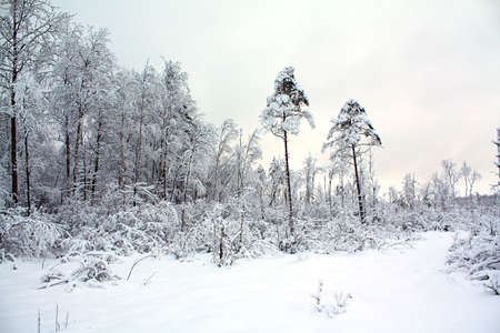 wood in snow Stock Photo - 6658188