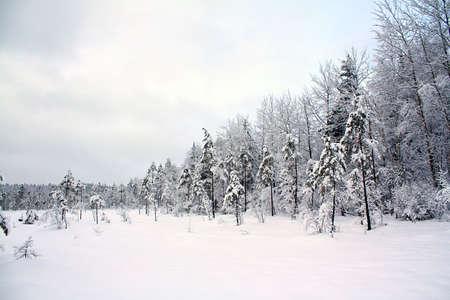 wood on edge snow field Stock Photo - 6658101