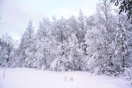 wood in snow Stock Photo - 6658045