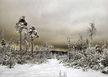 wood in snow Stock Photo - 6647758