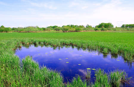 small lake on field Stock Photo - 6843856