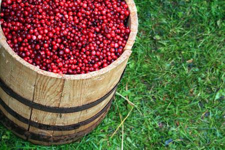 cranberry in barrel photo