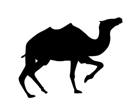 silhouette camel on white background  イラスト・ベクター素材