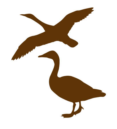 wild duck:  silhouette goose on white background Illustration
