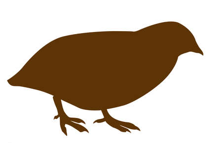 silhouette of the quail on white background