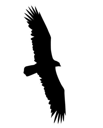 golden eagle:  illustration flying birds on white background