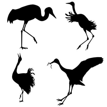 silhouettes of the cranes on white background Stock Vector - 7038403