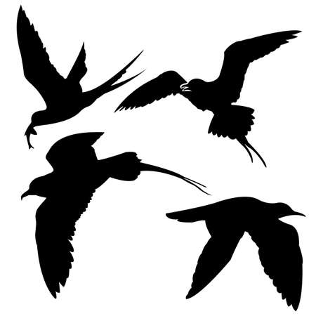 silhouette of the sea birds on white background Vector