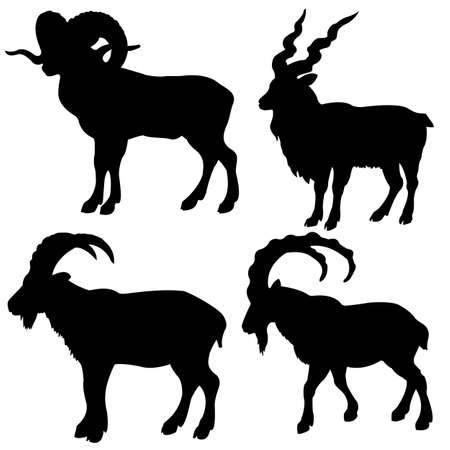 rams horns: silhouette mountain ram on white background