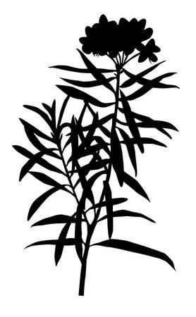 marsh plant:  illustrazione della pianta palude su sfondo bianco Vettoriali