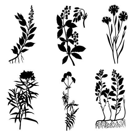 stalks: silhouettes of the medicinal plants on white background