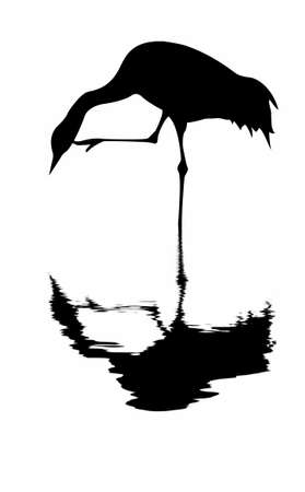 silhouette of the crane on white background Vector