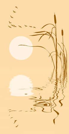 gansos: dibujo de manada de gansos de totora  Vectores