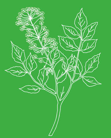 silhouette of the plant on green background Vector