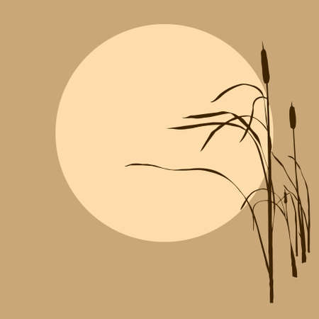 bulrush: reed on background sun Illustration