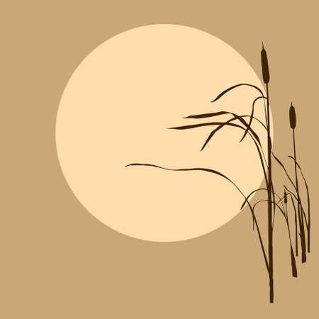 cattail: reed on background sun Illustration