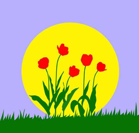 against the sun: illustration tulip against sun Illustration