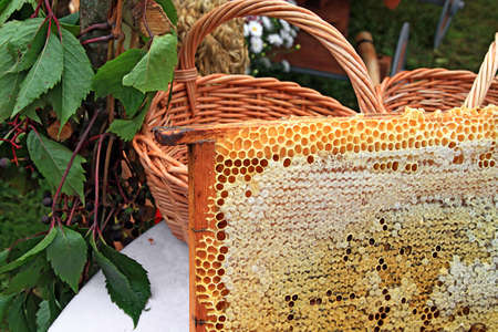 honeycomb  photo