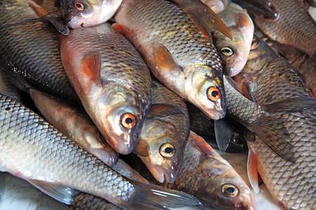 pesquero: peces  Foto de archivo