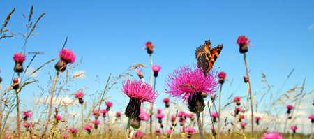 butterflies flying: de mariposas en flor