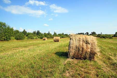agronomic: hay in stack