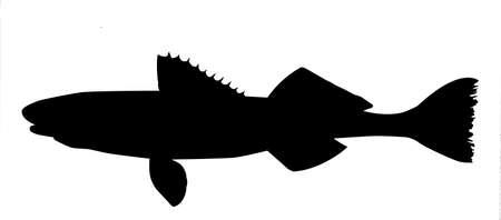 lota: silueta de pescado sobre fondo blanco  Foto de archivo