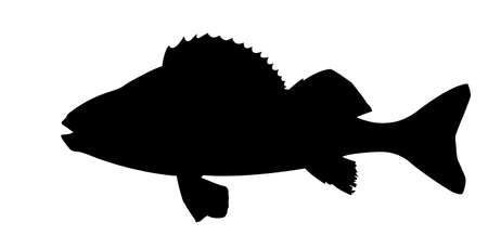 burbot: silhouette of fish on white background Stock Photo