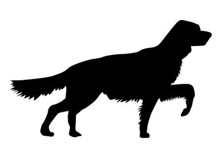 silhouette of the setter on white background photo