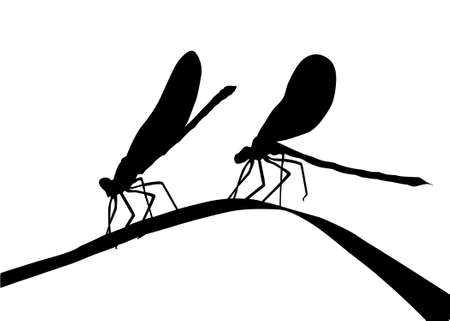 silhouette two dragonflies on herb photo