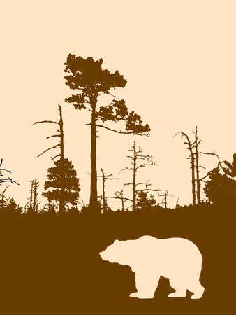 cedar tree:  silhouette bear on background wild wood    Stock Photo