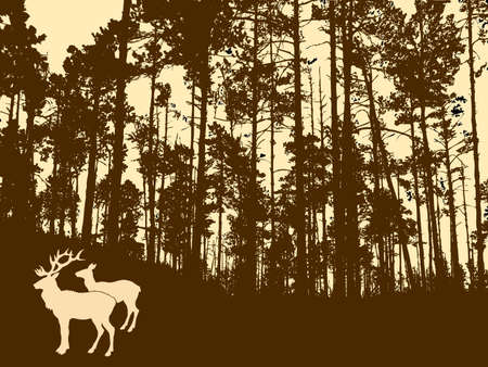 silhouette of the deers in thick wood     photo