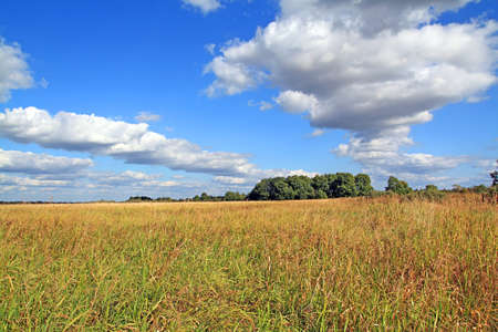 copse: oak copse on autumn field