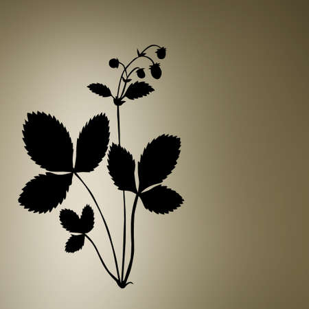 petiole: silhouette of the bush of the strawberry  Stock Photo
