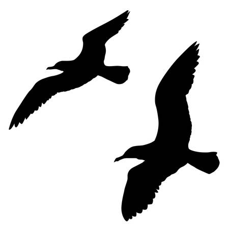 seagull:   silhouette of the sea gull on white background Illustration