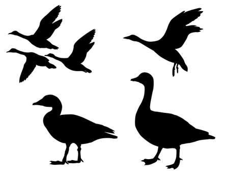 gansos: gansos de silueta sobre fondo blanco  Vectores