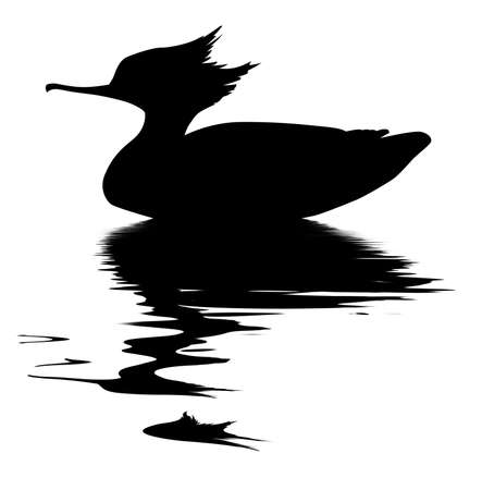 drawing fish duck on white background Vector