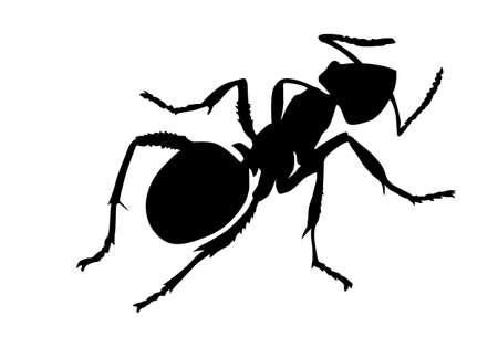 end line: silueta hormiga sobre fondo blanco  Vectores