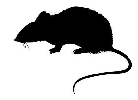 plagas: silueta de la rata sobre fondo blanco
