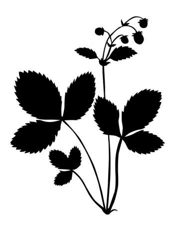 fruit stalk: silhouette of the bush of the strawberry on white background Illustration