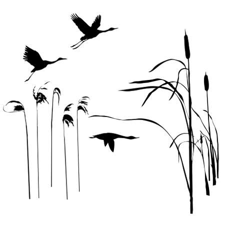 rietkraag:   tekening vogels vliegen  Stock Illustratie