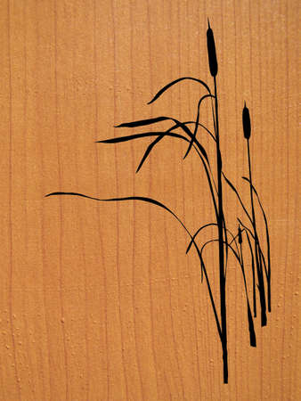 bulrush: reed on wood background       Illustration