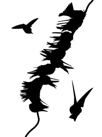 migrating: migrating swallows on wire       Illustration