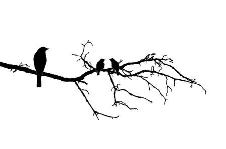 silhouette of the birds on branch Vector