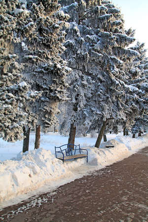 bench in winter park Stock Photo - 7705346