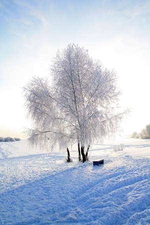 tree in snow against sun photo