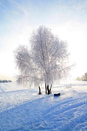tree in snow against sun photo