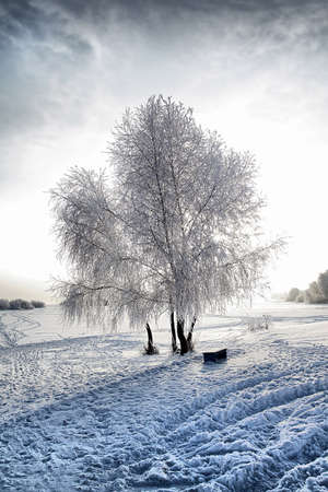 tree in snow against sun. hdr photo